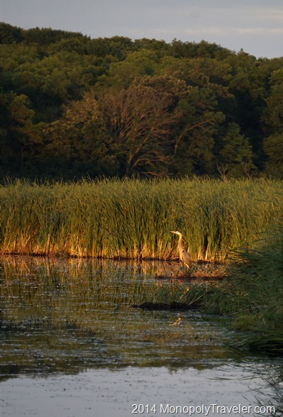 Evening with a Blue Heron taken with an Interchangeable Lens Camera
