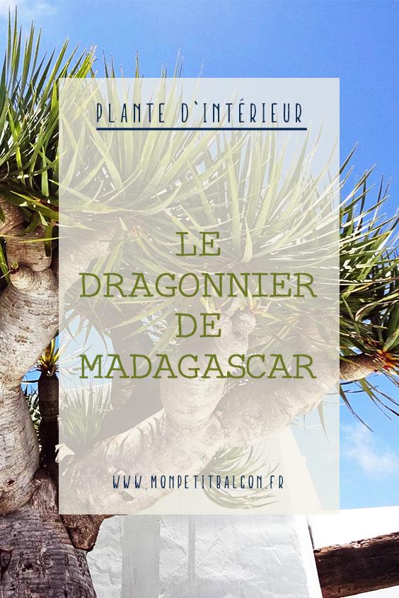 Dragonnier de Madagascar plante dépolluante en appartement pinterest