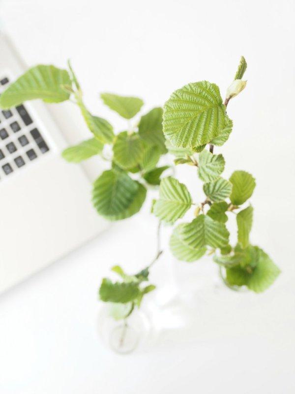 Green-Inspiration