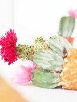 DIY Cacti Cones