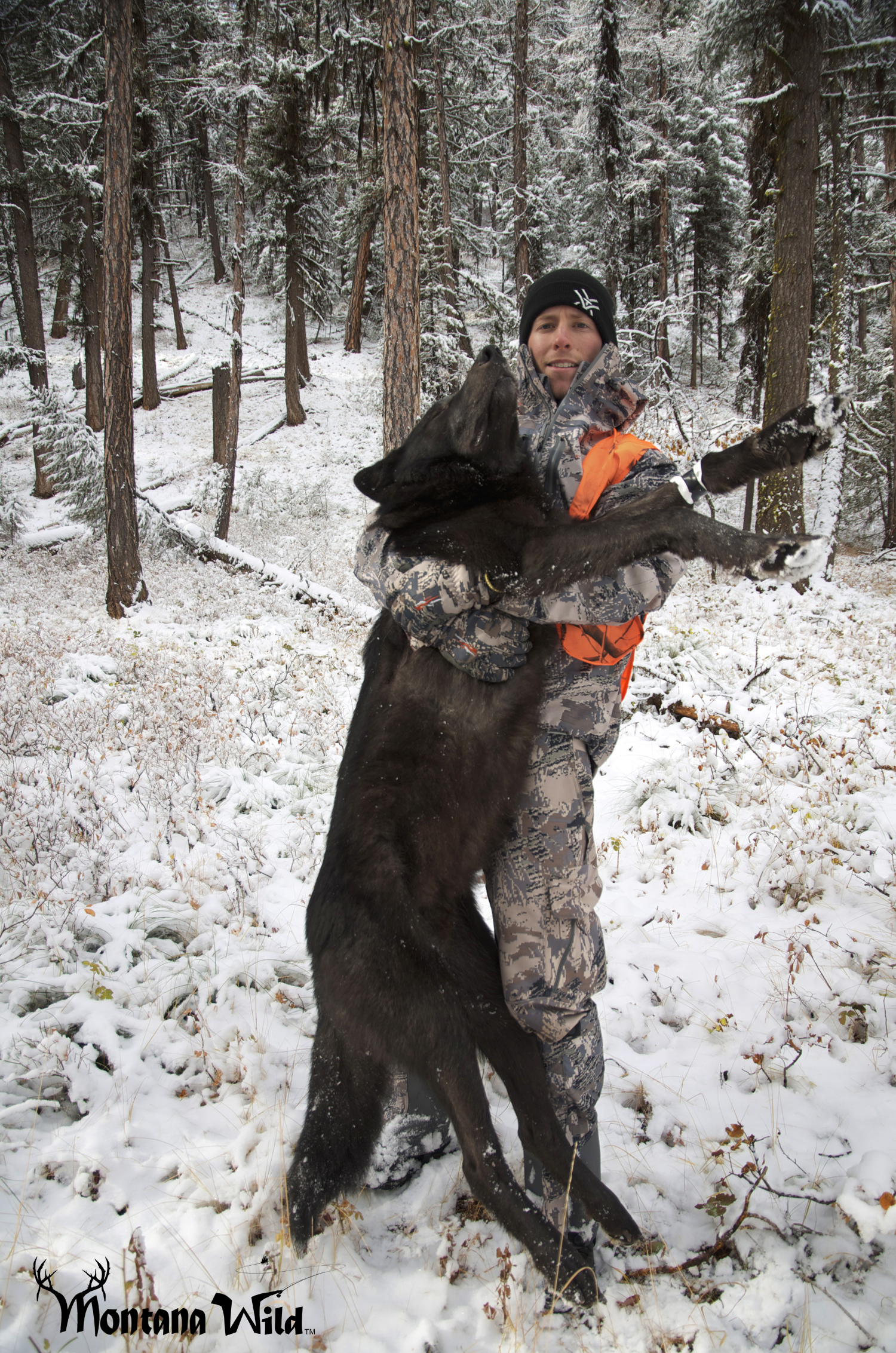 Congenial Alpha Wolf Size Comparison Alpha Wolf Size Comparison Animal Kid Wolf Species Size Comparison Grey Wolf Size Comparison bark post Wolf Size Comparison