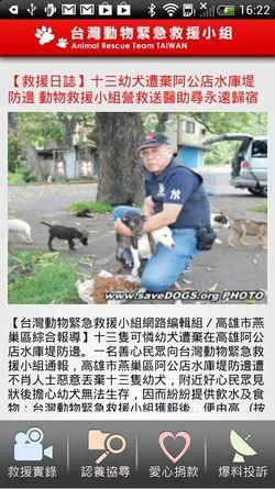 save_dog_cat_4