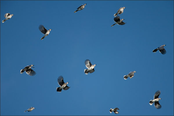 Ex-Blue-Jays.jpg