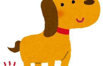 dog_fun