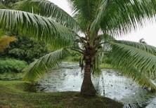 Vaipahi Gardens Pond