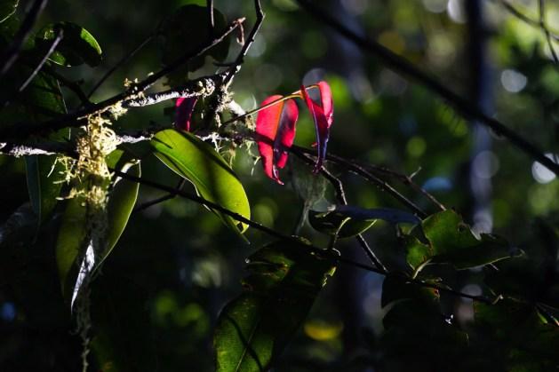 Quelques feuilles de cet arbre passent leur automne pendant que les autres sont en plein été