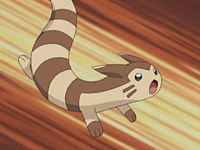 Furret_season5