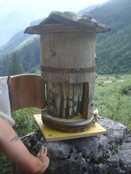bee-hive-12