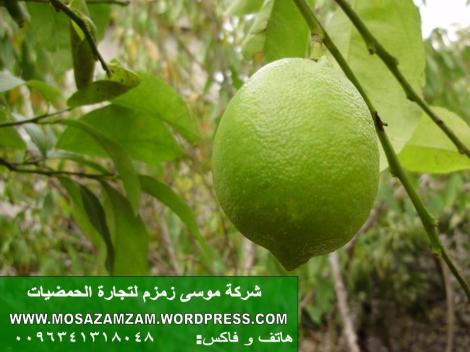 شركة موسى زمزم لتجارة الحمضيات (1)