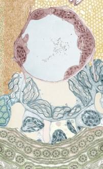 dmaucher-mitocollage-2-lgvert.jpg