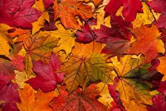 How seasons affect us