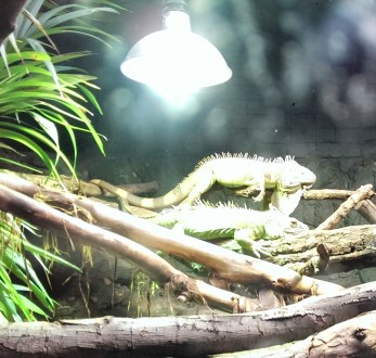 Lizards. They just lie there. A bit lazy