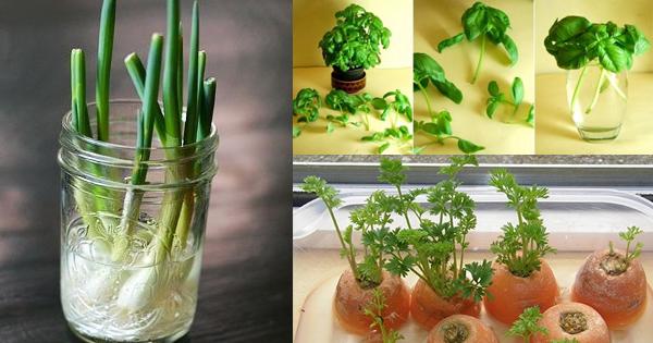 6 warzywa i zioła, które wyhodujesz sam w domu.