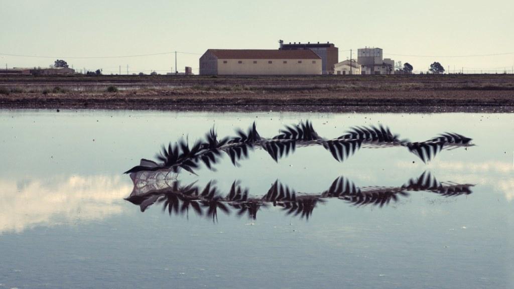 Xavi Bou - Ornithographies-7