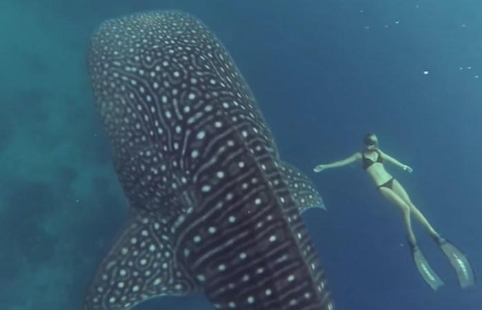 La plongeuse Ocean Ramsey nage avec un requin-baleine