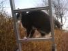 on ladder