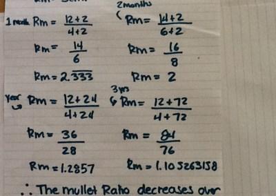 mullet-ratios-af2