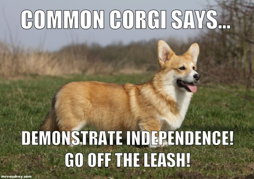 Common Corgi - independence