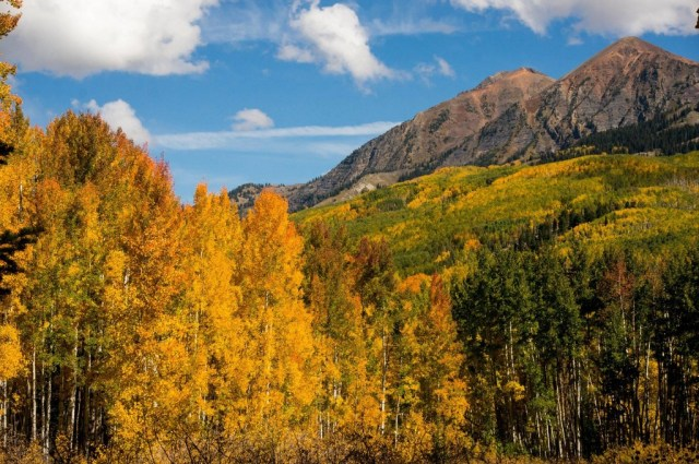 Kebler Pass aspens in September