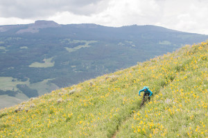 Mountain Biker in a field of Sunflowers near Crested Butte, CO