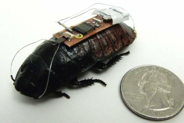 18. Бионические насекомые Reired, прогноз, технологии