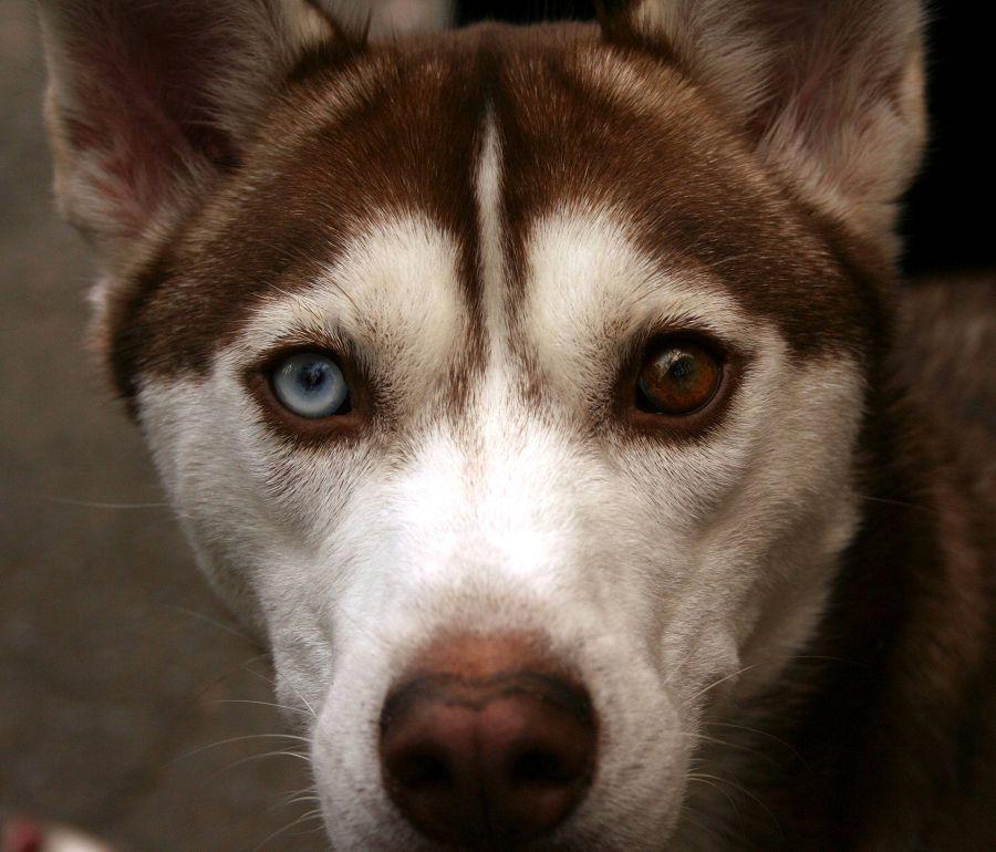 Болезни глаз у собаки с фото