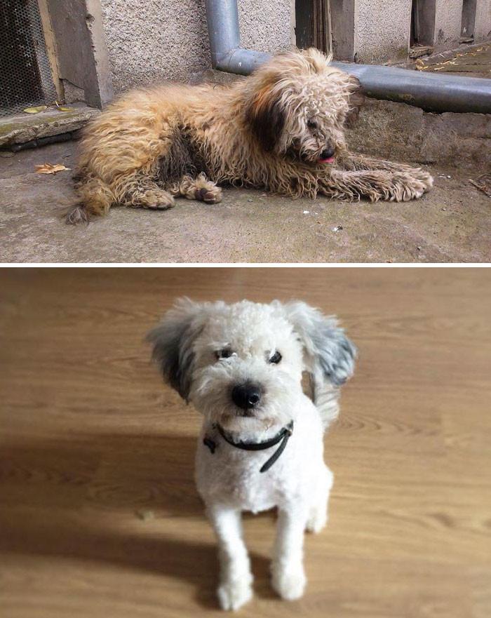 От июля до декабря: спустя полгода уже невозможно поверить, что это одна и та же собака! Счастливый конец, собаки, спасение