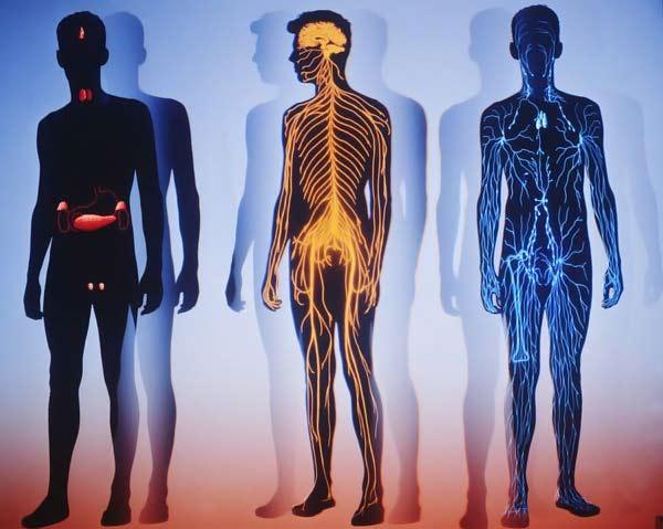 Десятка впечатляющих фактов о нашем теле
