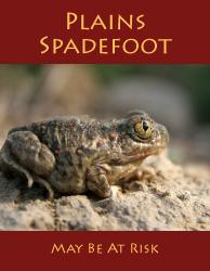 Plains Spadefoot