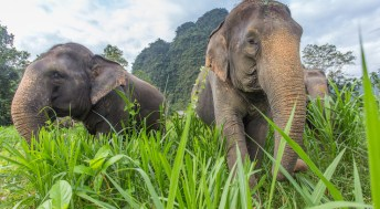 12 great things to do in Thailand with kids