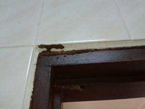 Termite Tracks