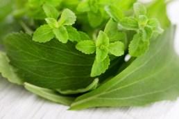 fresh stevia natural sugar - herbs and spices