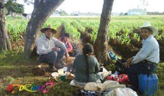 Campesinos desayunando después de una mañana de labor - foto por Osorious Oso