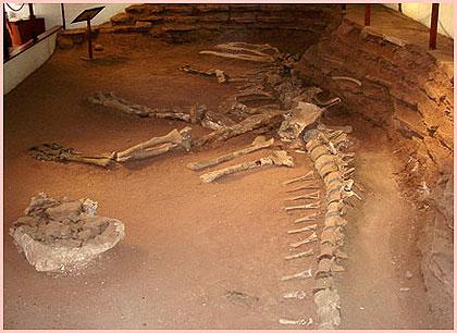 1laVqrb Extinción de los dinosaurios.