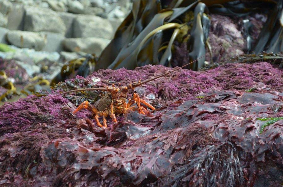 Crustáceos del lecho marino quedaron expuestos.
