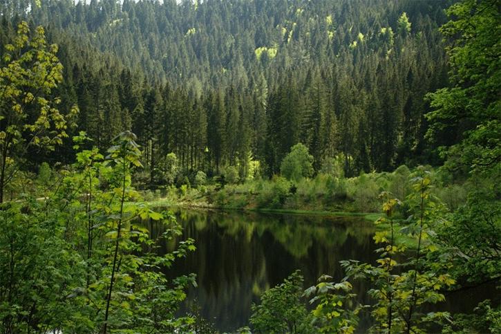 bosques-malditos-del-mundo-2 Bosques malditos del mundo