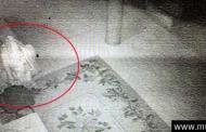 Imágenes demuestran cómo un lama resucita 89 años después de su muerte