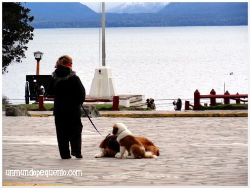 perros san bernardo bariloche