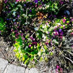 Blumen3_S