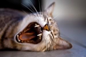 kitten-1257827_640