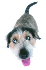 Must Love Dogs   Dog Training   Pet Sitting   Dog Walking