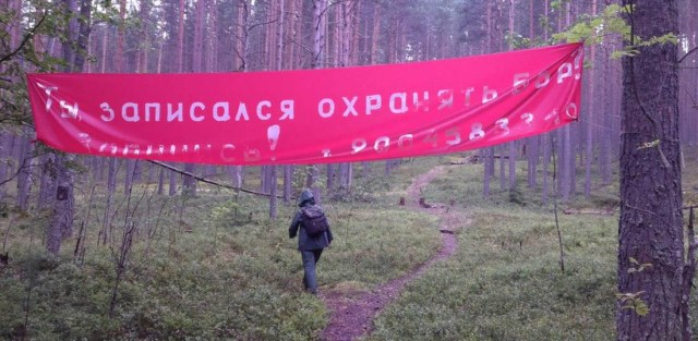 В Сунском бору. Фото: Алексей Владимиров