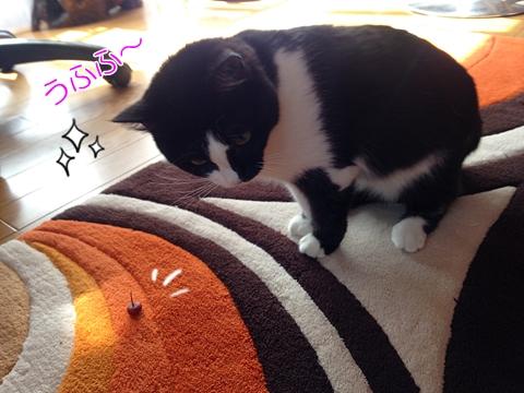 猫とローズヒップ