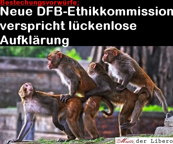 dfb_affen.jpg