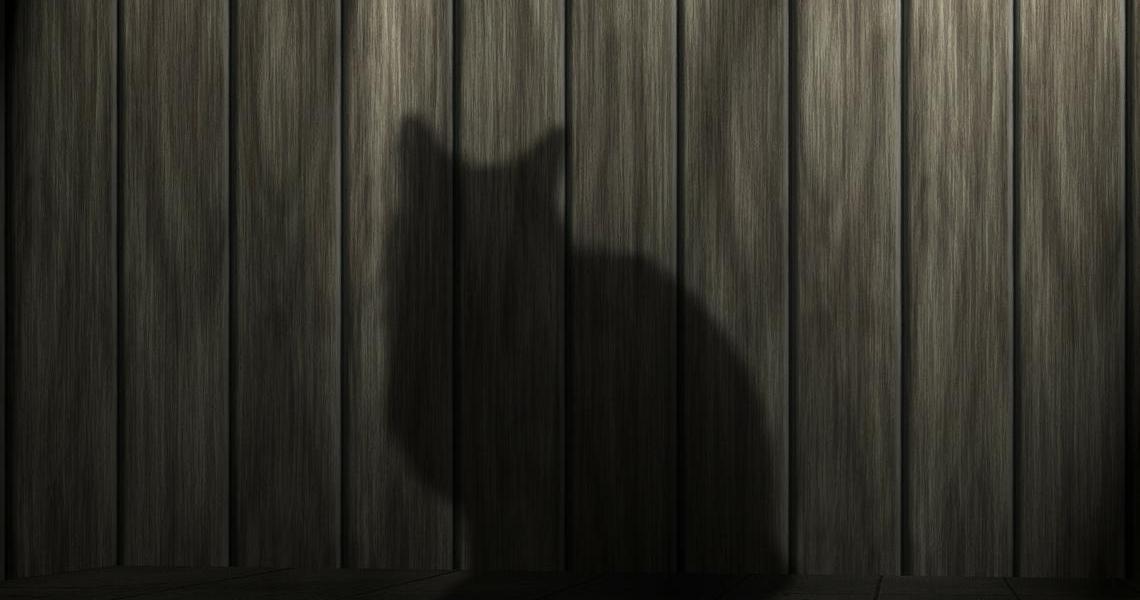 Schatten einer Katze