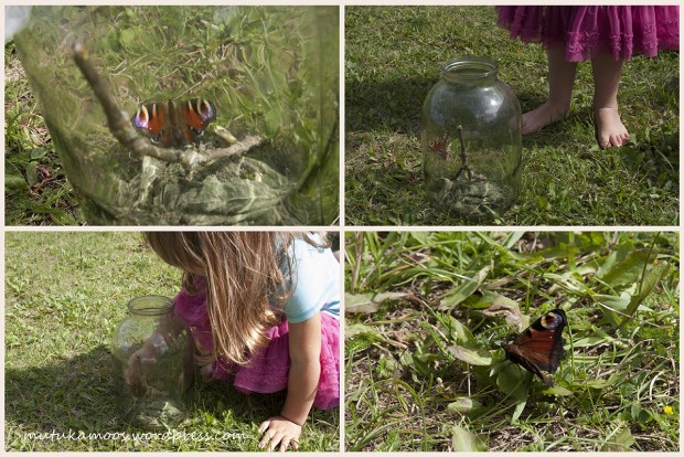 liblika kasvatamine 3