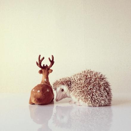 mrwonderful_darcy_the_flying_hedgehog_erizo_05
