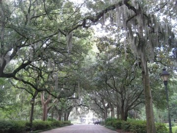 Photo by Patrick Ross of Savannah