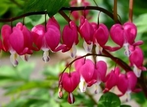 Bleeding Hearts for Tweets