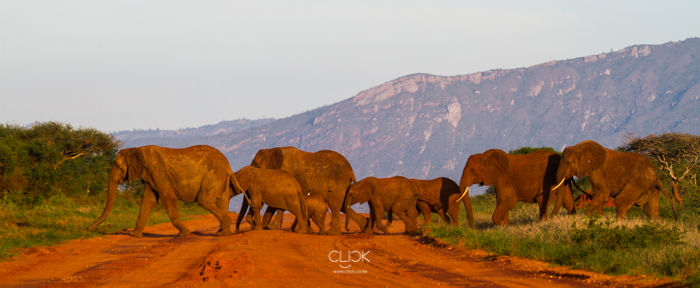World_Elephant_Day-5